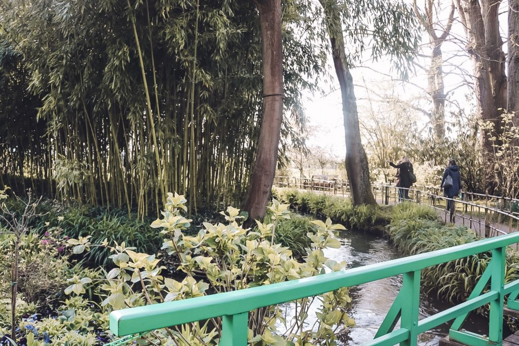 View of bamboo in Monet's zen garden at Giverny
