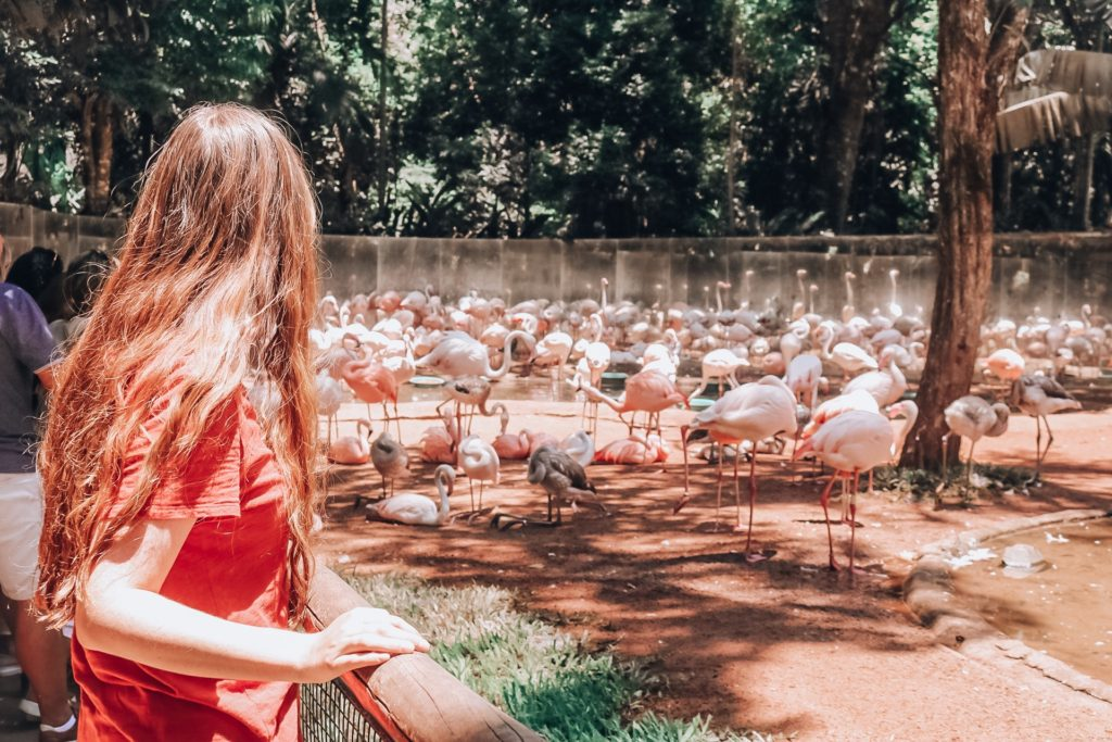 girl in front of flamingos at Parque de Aves in Iguazu Falls Brazil